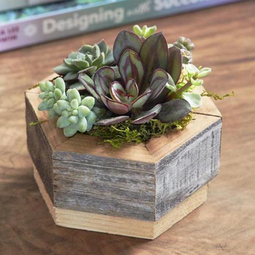 A close up of a small hexagonal succulent planter, made from wood, set on a wooden surface.