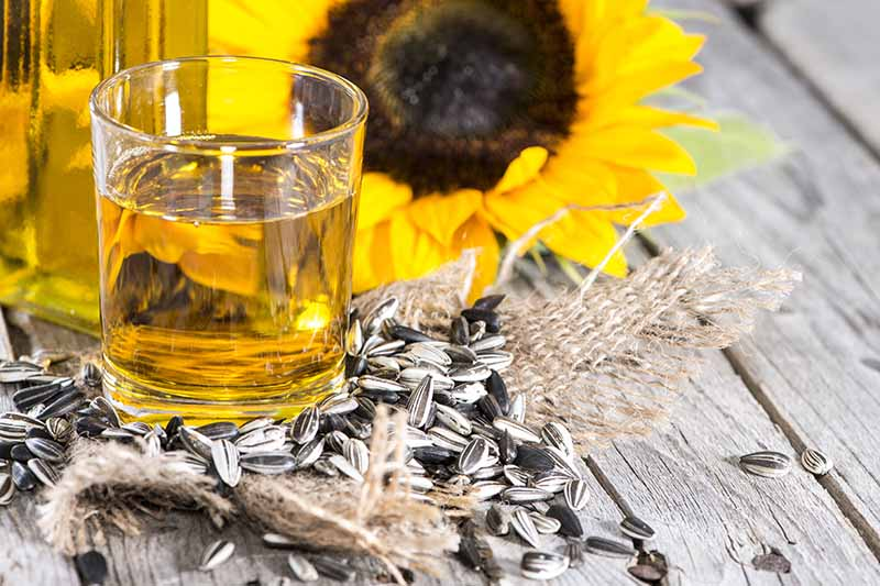 A close up of a glass containing sunflower oil, surrounded by seeds, with a yellow flower in the background, set on a wooden surface.