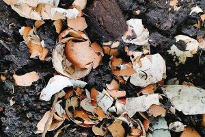 How to Use Eggshells in the Garden for Soil, Compost, and as Pest Control