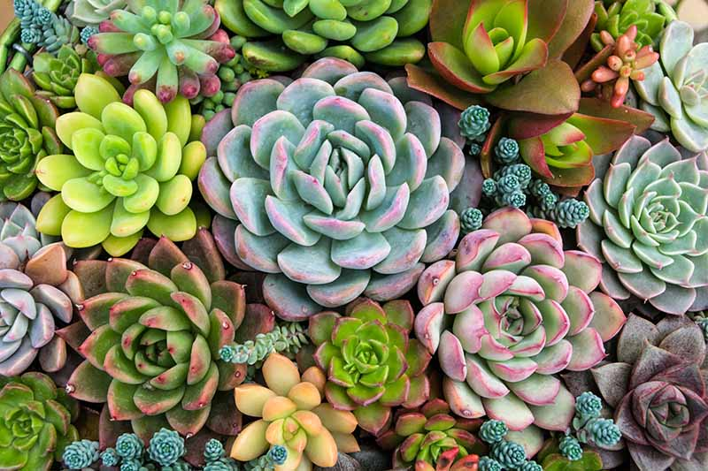A top down close up of a variety of different succulent plants growing in a container indoors.