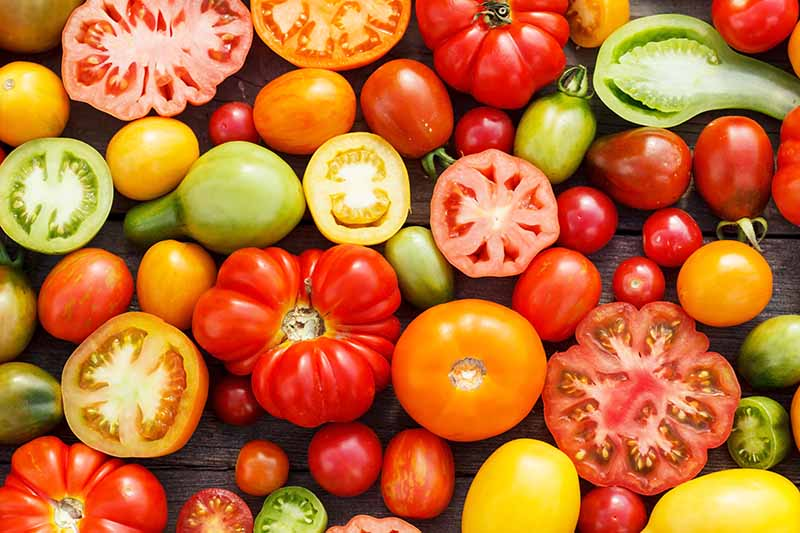 A close up background picture of a variety of different tomato cultivars, some are cut in half and others pictured whole, set on a wooden surface.