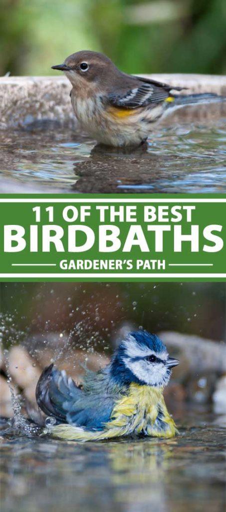 A collage of photos showing birds enjoying different models of birdbaths.
