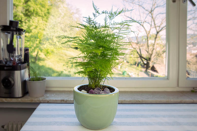 A close up of a plant in a light green ceramic pot placed on a table in front of a window, on a sunny day.