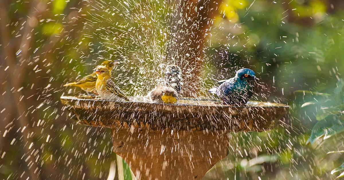 11 Of The Best Birdbaths For Your Backyard In 2021 Gardener S Path