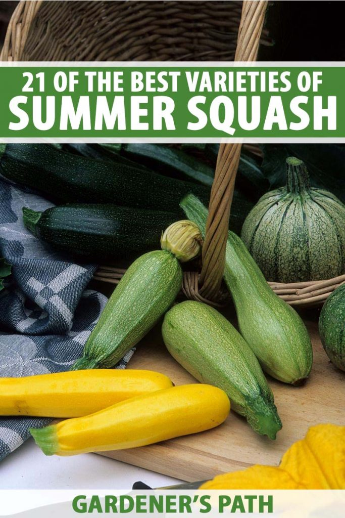 A vertical picture of a wicker basket with several different types of summer squash scattered around, from dark green zucchini to yellow crookneck. To the top and bottom of the frame is green and white text.