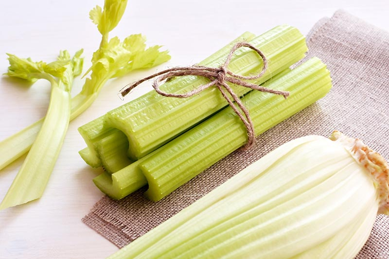 A close up of celery stalks that have been blanched to keep them white and tender, on a white background.
