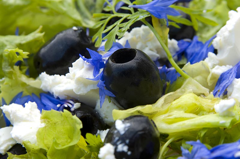 A close up of a summer salad with olives and feta cheese, garnished with little blue flowers.
