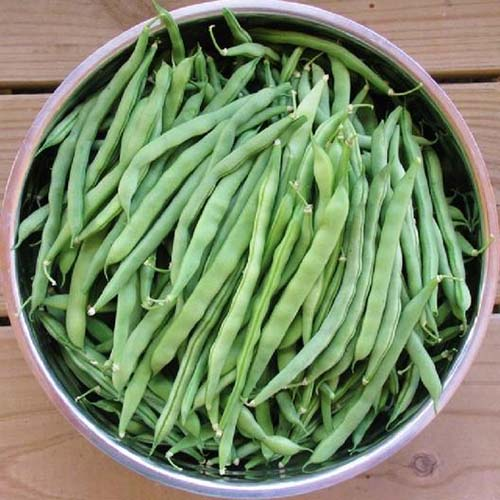 A close up, top down picture of a bowl of 'Blue Lake' pole beans in a ceramic bowl, set on a wooden surface.