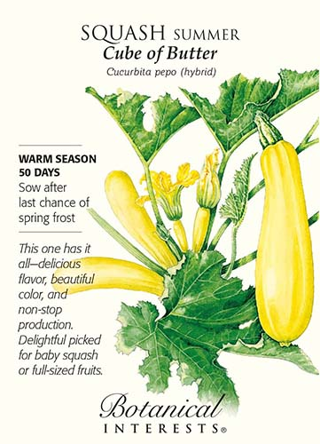 A close up of a seed packet showing a hand-drawn image of a bright yellow squash 'Butter Summer Squash' growing on the vine, surrounded by text.