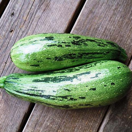 A close up of two 'Caserta' squash, with light green skin mottled with dark flecks, set on a wooden surface.