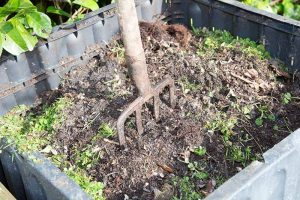 How and When to Compost Tomato Plants