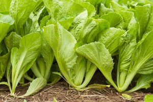 Health Benefits of Mustard Greens