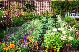 Garden Folklore Galore: Reviewing Popular Garden Myths