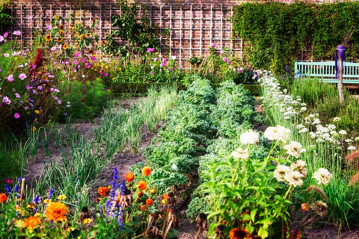 A garden scene showing rows of vegetables, flowers, and perennial borders, pictured in bright sunshine.