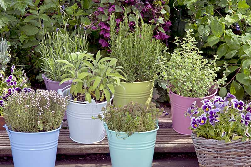 A close up of a variety of different herbs growing in small colorful pots outdoors on a wooden surface.