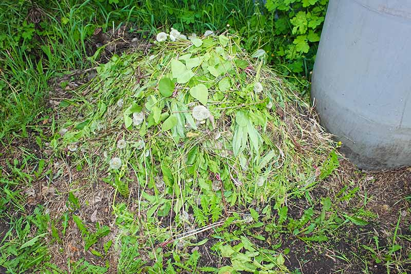 A close up of a home compost pile containing weeds and other garden waste.