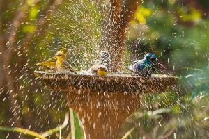 11 of the Best Birdbaths: Your Guide to Water Features for Your Feathered Friends