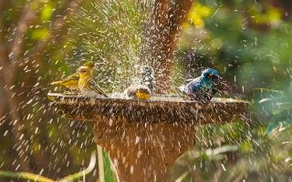 A close up of a variety of different birds splashing in water in a bowl placed in the garden, pictured in bright sunshine, on a soft focus background.
