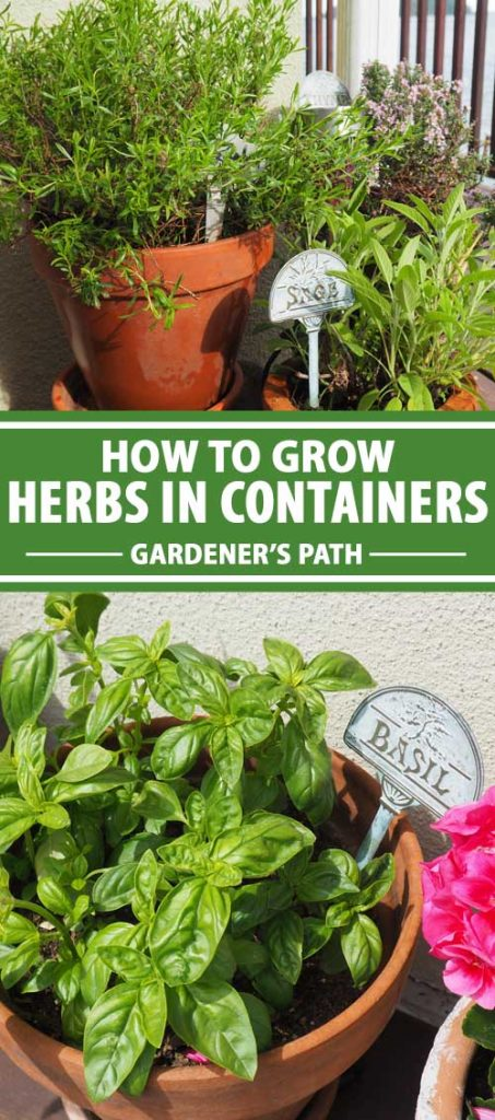 A collage of photos showing different types of herbs growing in pots and containers.