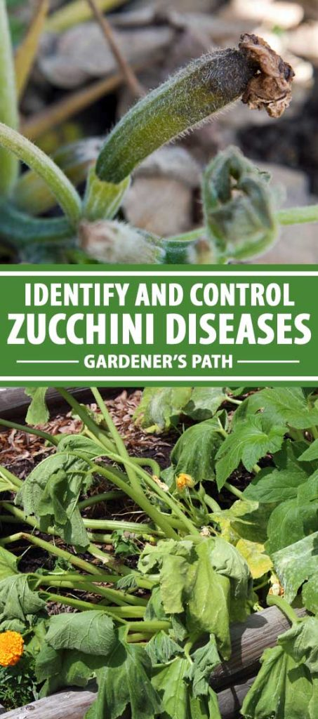 A collage of photos showing zucchini plants affected by different diseases.