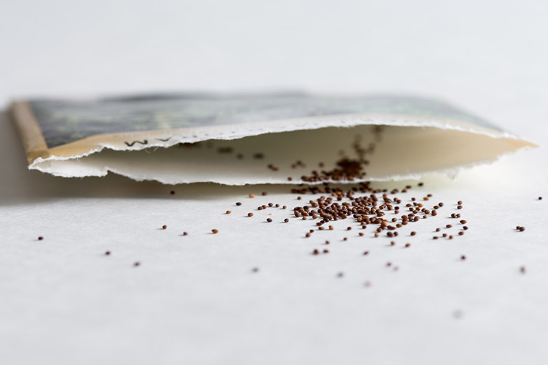 A close up of a seed packet with Origanum majorana spilling out onto a white surface.
