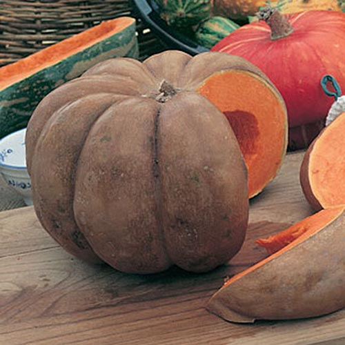 A close up of a large 'Musquee de Provence' pumpkin with slices cut out of it, showing bright orange flesh and light brown skin, set on a wooden surface.