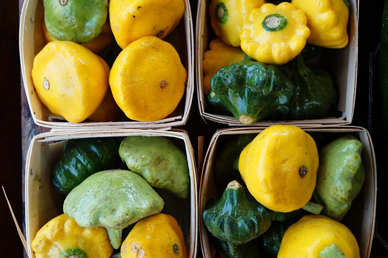A close up, top down picture of small wooden boxes containing different varieties of patty pan, or scallop squash, in various colors, yellow, dark and light green.