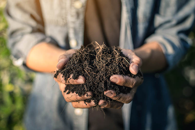 A close up of two hands holding rich, dark compost, pictured in light sunshine.
