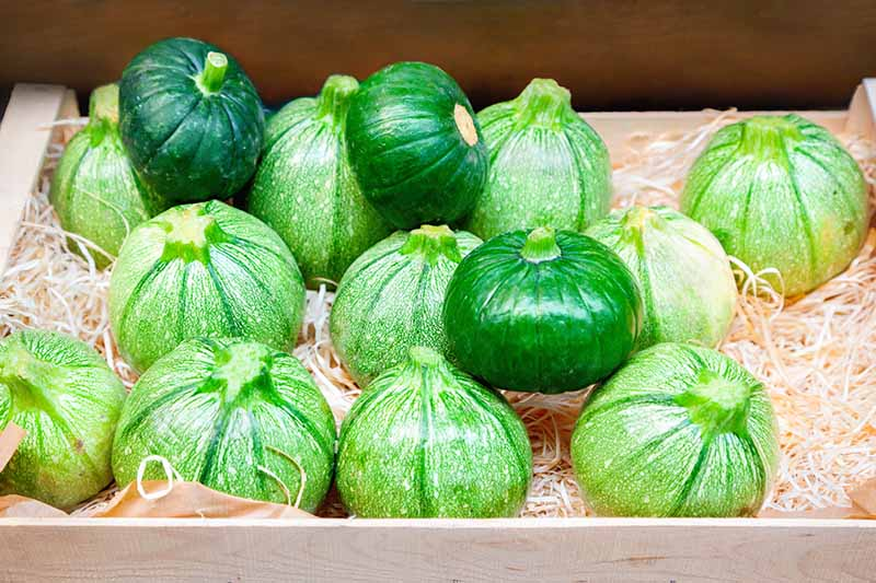 A close up of a box containing round zucchini fruits, some deep green, and others light green with white flecks.