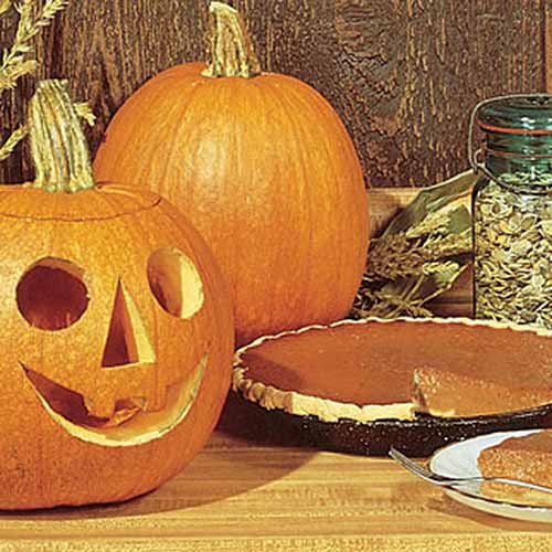 A close up of a pie, with a carved jack-o-lantern to the left of the frame, set on a wooden surface.