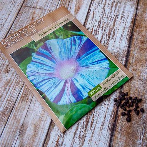 A close up of a seed packet with a picture of a blue bicolored flower on the cover, set on a wooden surface.