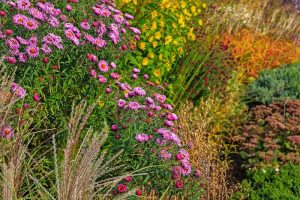 13 of the Best Companion Plants for Tall Late Season Asters