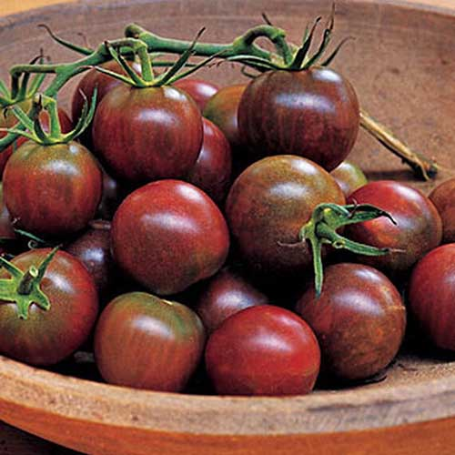 A close up of 'Black Pearl' cherry tomatoes, freshly harvested and placed in a wooden bowl.