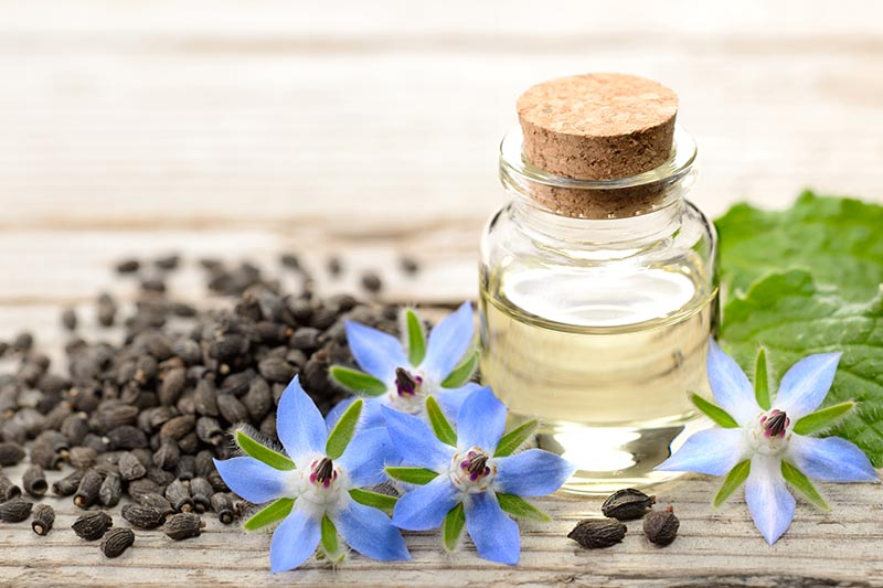 A close up of a wooden surface with Borago officinalis seeds, flowers, leaves, and a small glass jar with essential oil.