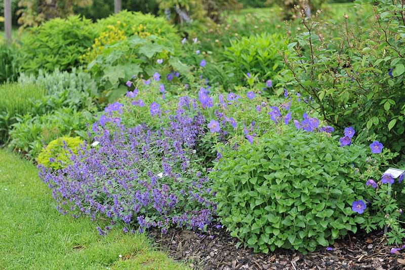 A close up of a garden border with a variety of different perennial shrubs.
