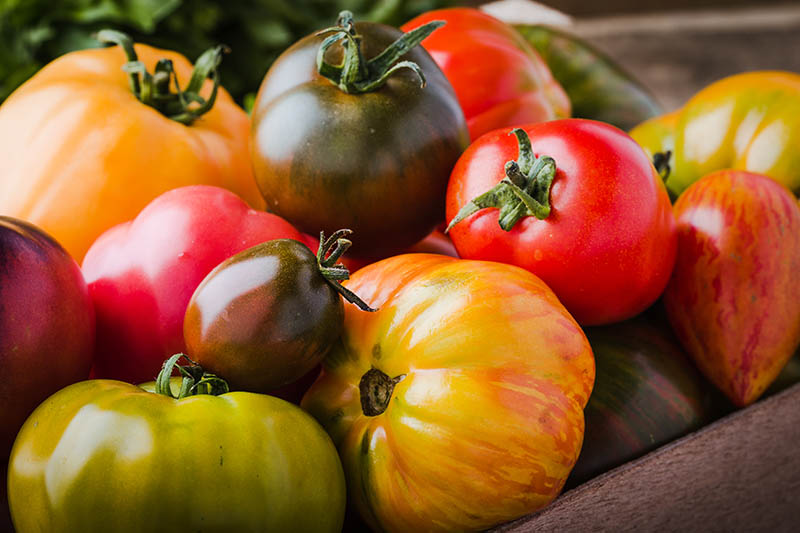 A close up of a variety of different colored heirloom tomatoes, red, yellow, green, and orange, set in a wooden box, pictured in light sunshine.