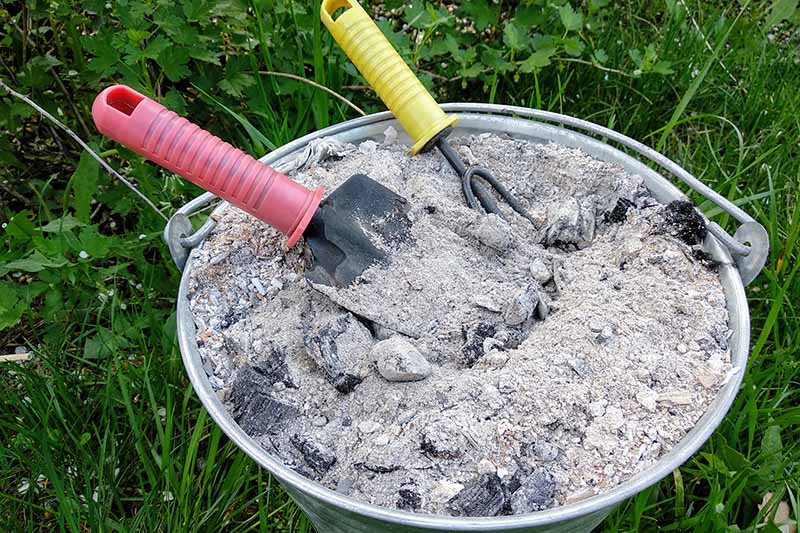 A close up of a metal bucket full of wood ashes from the fireplace, with a small shovel and cultivator, set on a lawn.