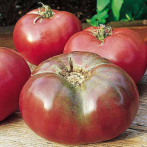 A close up of freshly harvested 'Cherokee Purple' heirloom tomatoes set on a wooden surface.