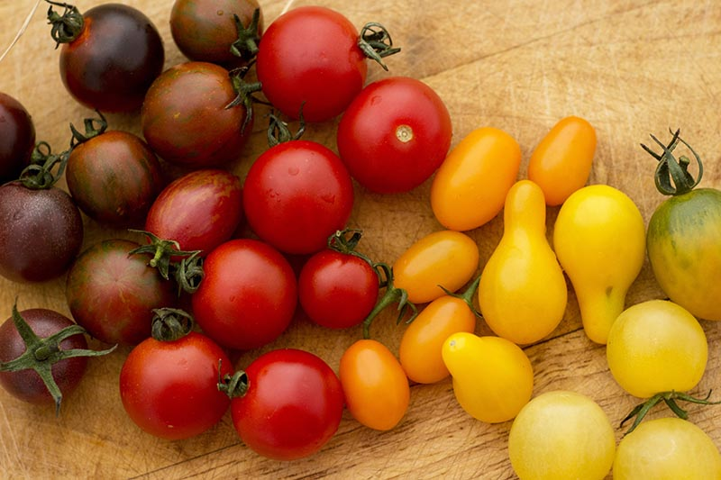 A close up of a variety of cherry tomatoes, on a background of a wooden surface.