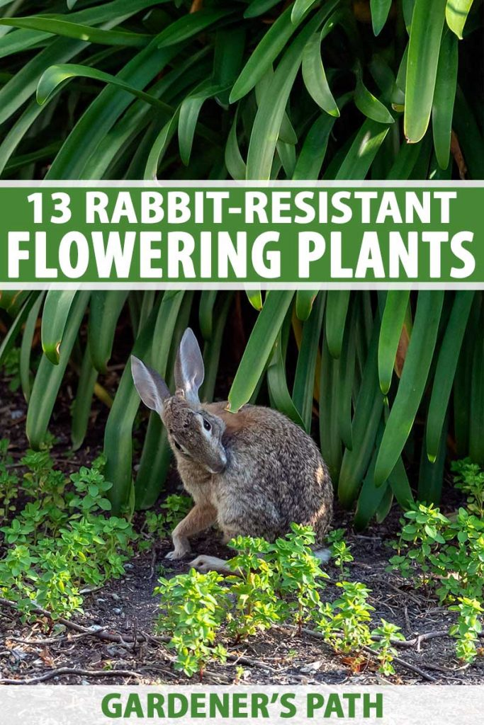 A vertical picture of a rabbit underneath a large green plant. To the center and bottom of the frame is green and white text.