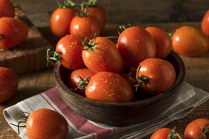 A close up of a wooden bowl with freshly harvested 'Roma' tomatoes with droplets of water on the surface, set on a cloth on a wooden surface, pictured in evening sunshine.