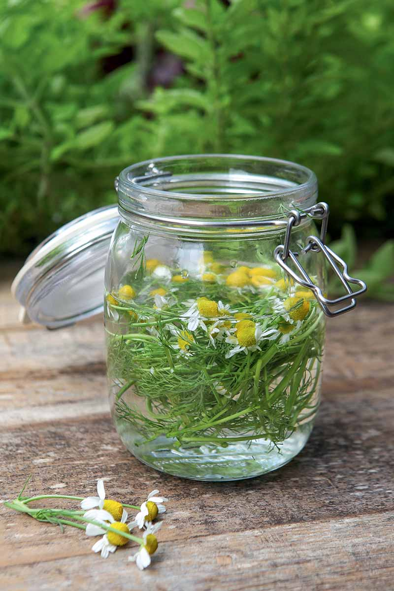 A vertical picture of a kilner jar containing flowers and herbs in water, set on a wooden surface, with foliage in soft focus in the background.