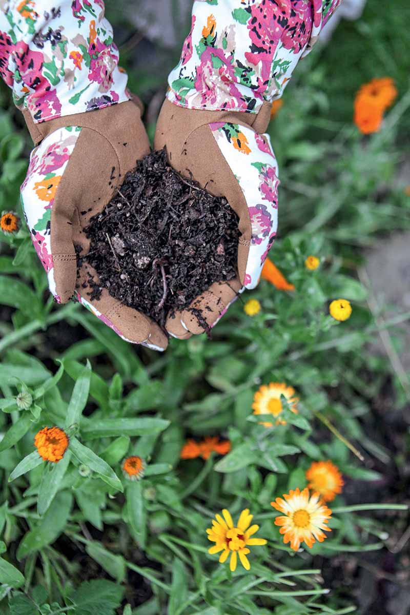 A vertical picture of two hands wearing gardening gloves holding a scoop of compost, with flowers in soft focus in the background.