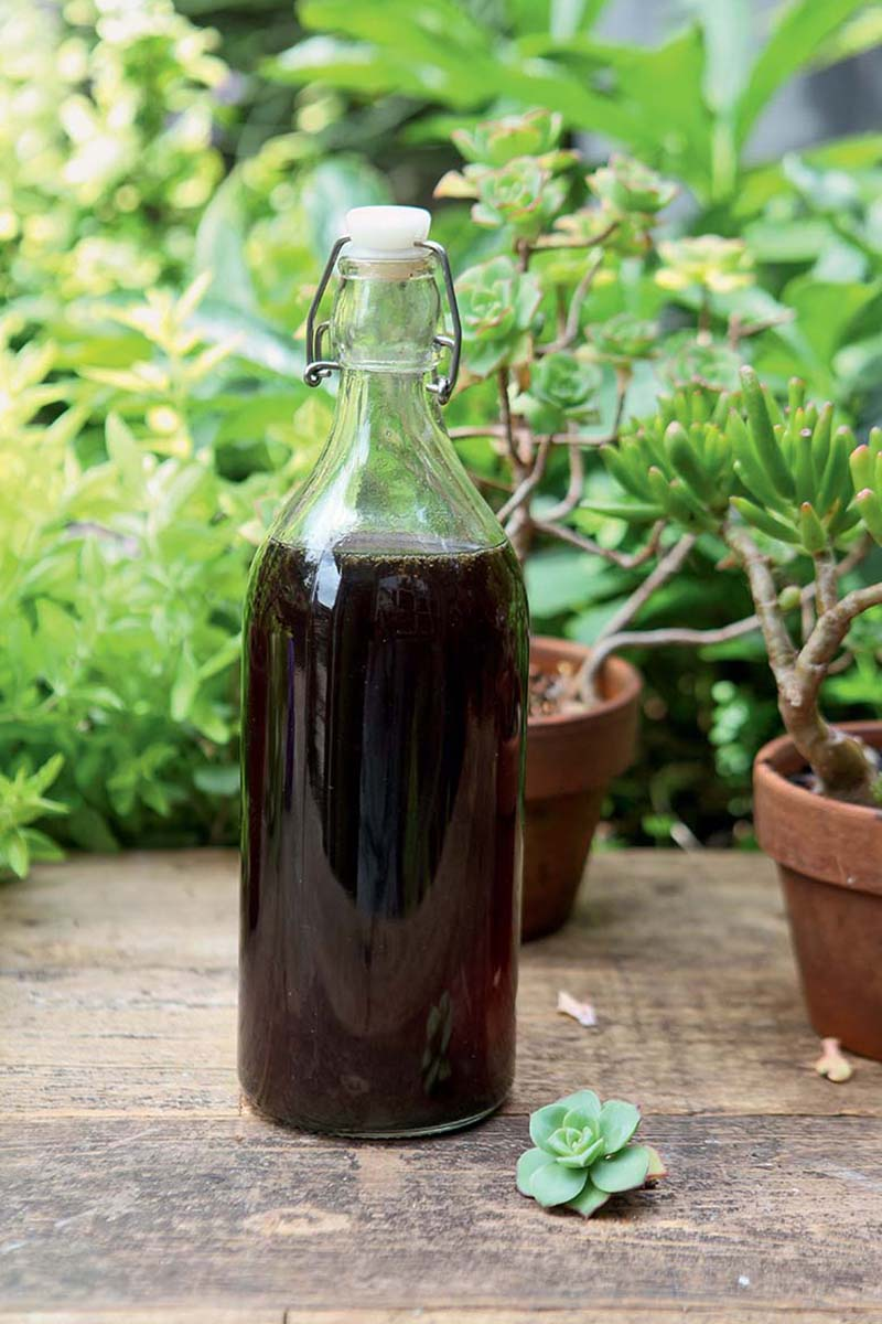 A close up vertical picture of a glass bottle with a dark liquid set on a wooden surface with terra cotta pots in soft focus in the background.