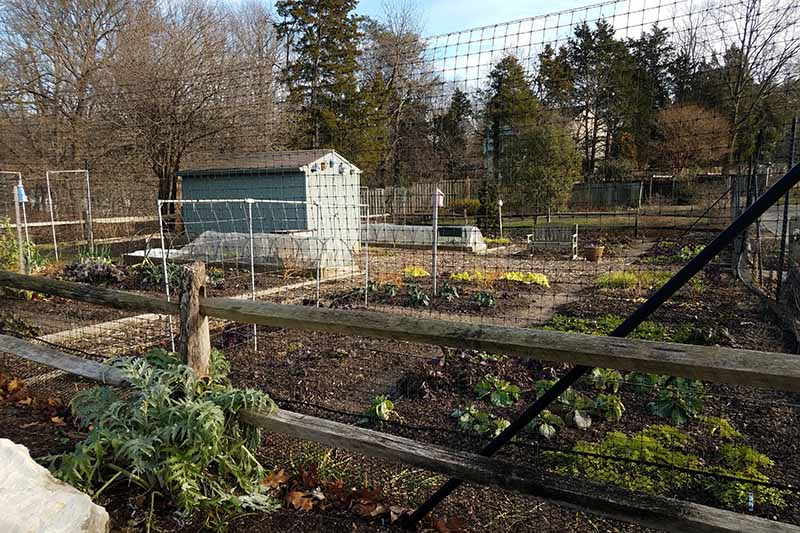 A vegetable garden with a shed, surrounded by high deer fencing to keep animals out.