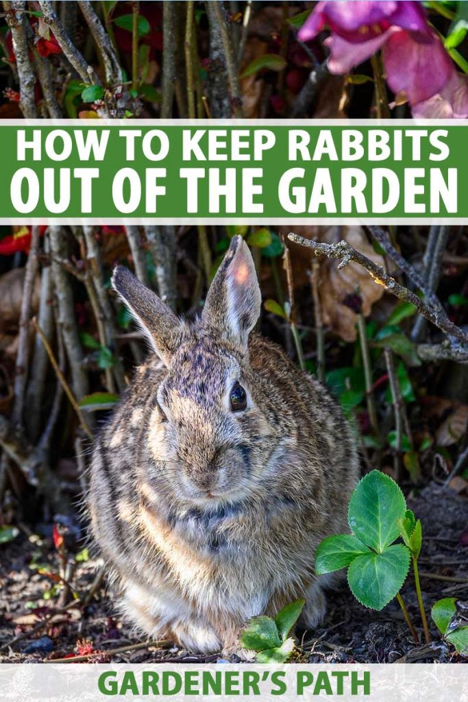 How to Keep Rabbits Out of the Garden | Gardener's Path