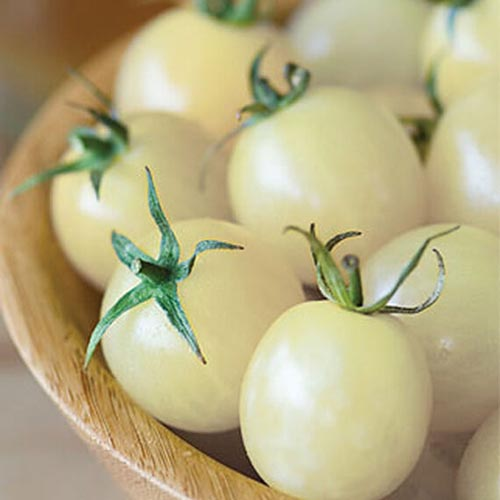 A close up of the pale yellow, almost white fruits of 'Italian Ice,' a cherry tomato variety, set in a wooden bowl.