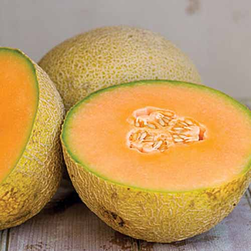 Square closely cropped image of one whole and one halved 'Olympic Express' muskmelon, with pale orange flesh and yellowish rinds, on a wood surface.