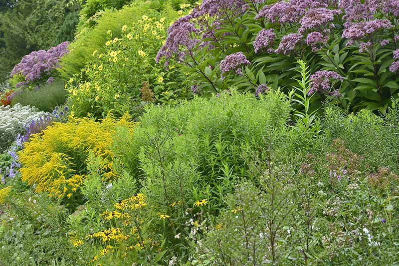A perennial flower border with a variety of different plantings in the summer garden.
