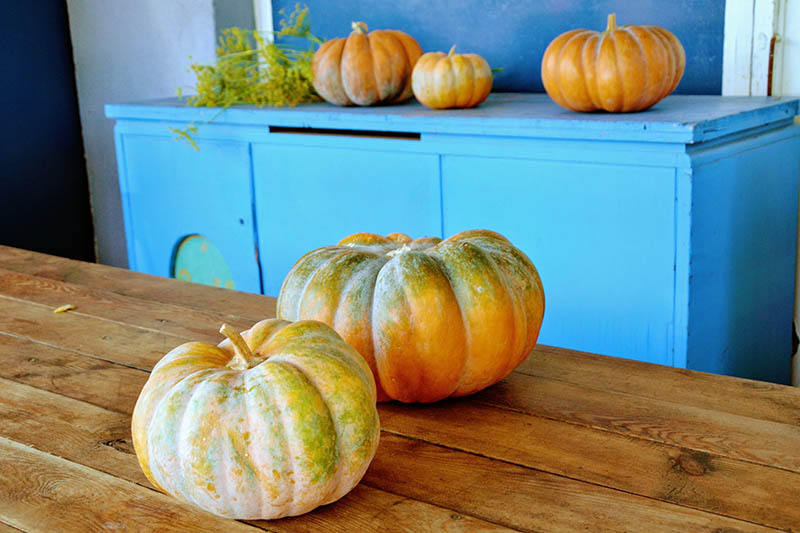 A close up of winter squash set on a wooden table, with a blue sideboard in the background.